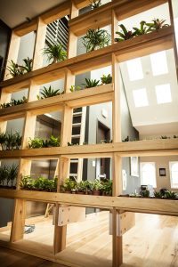 web225-interior-plants